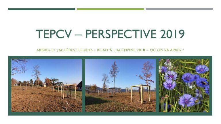 TEPCV - Prospective 2019